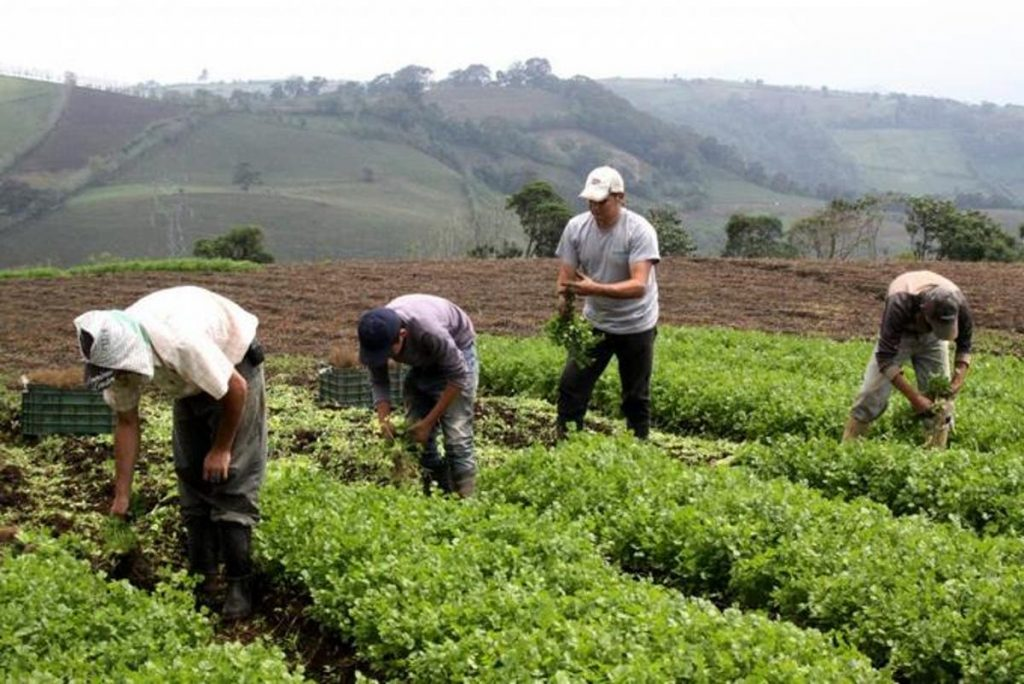 Guatemala's agriculture impact inside the country and exportation